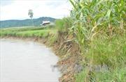 Đồng Tháp mỗi năm mất 30 -50 ha đất ven sông do sạt lở