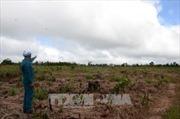 UBND tỉnh Đắk Nông yêu cầu nâng mức kỷ luật với cán bộ kiểm lâm làm mất rừng
