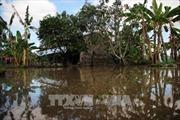 Cà Mau: Vùng giáp biển ứng phó với thời tiết cực đoan