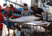 Quản lý chặt tàu cá để khắc phục 'thẻ vàng' với thủy sản Việt Nam