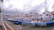Đình chỉ hoạt động tàu vi phạm trên Vịnh Hạ Long