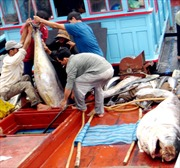 Phú Yên: 134 tàu cá sẽ đón Tết trên biển