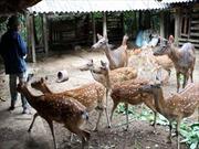 Hà Tĩnh: Phát triển nghề nuôi hươu ở Hương Sơn