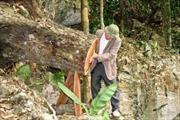 Rừng nghiến Vườn Quốc gia Ba Bể đang bị tàn phá