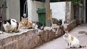 Ly dị vì vợ nuôi 550 con mèo trong nhà