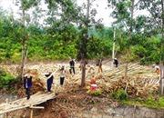 Để đất rừng không bị lãng phí