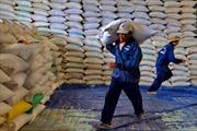 Philíppin có thể nhập khẩu 100.000 tấn gạo Việt Nam