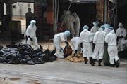 Một bé trai Trung Quốc bị nhiễm cúm gia cầm H5N1