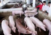 Giới hạn dư lượng thuốc vỗ béo gia súc