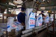 Công ty supe phốt phát Lâm Thao phấn đấu trở thành con chim đầu đàn