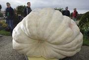 Quả bí ngô nào nặng nhất châu Âu?