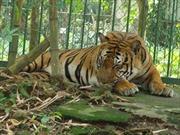Cấm nhập khẩu mẫu vật tê giác, hổ, voi...