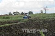 Sẽ sớm xử lý dứt điểm việc tranh chấp đất ở các công ty nông, lâm nghiệp