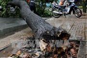 Đi tham quan cùng mẹ, bé gái 9 tuổi bị cây đổ đè chết