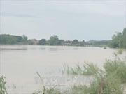 Mực nước các sông biến đổi chậm, vùng biển phía Nam gió giật cấp 7-8