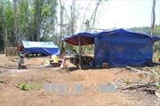 Khởi tố, tạm giam chủ mưu phá rừng ở huyện Đắk Glong, Đắk Nông