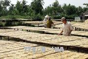 Thu nhập cao từ nghề làm chuối khô truyền thống
