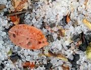 Mưa đá gây thiệt hại nhà cửa, cây trồng của người dân huyện Mộc Châu