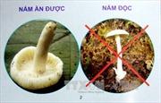 Ngộ độc nấm tại Hà Giang: 3 người chết, 1 người nguy kịch