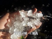 Lốc xoáy, mưa đá gây nhiều thiệt hại tại Tương Dương, Nghệ An