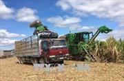 Mía đường trước sức ép hội nhập: Chiến lược lâu dài, liên kết với nông dân