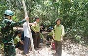 Bình Thuận: Nguy cơ cháy rừng cấp cực kỳ nguy hiểm