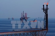 Giá dầu vẫn áp sát mức 'đỉnh' của hơn ba năm
