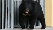 Mua chó về nuôi, hai năm sau mới phát hiện là gấu