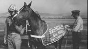 Huyền thoại trung sĩ Reckless, chú ngựa chiến vĩ đại