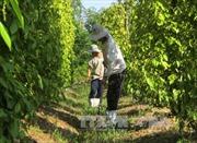 Thay đổi tư duy trong sản xuất nông nghiệp - Bài cuối: Tìm chiến lược dài hạn