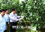 Đoàn công tác của Ủy ban Trung ương MTTQ Việt Nam thăm và làm việc tại tỉnh Phú Thọ