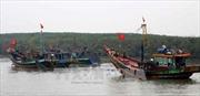 Nỗ lực gỡ bỏ 'thẻ vàng' IUU: Cơ hội và thách thức của ngành khai thác hải sản - Bài 1
