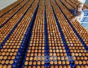 Thêm một báo cáo cho rằng Hà Lan mắc lỗi trong vụ bê bối trứng bẩn