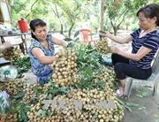 Hưng Yên bác bỏ thông tin giá nhãn 4.000 đồng/kg