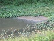 Phạt hơn 640 triệu đồng đối với doanh nghiệp gây ô nhiễm tại Sơn Động, Bắc Giang
