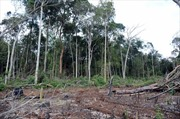 Chấm dứt dự án quản lý rừng của Hợp tác xã Hợp Tiến, Đắk Nông