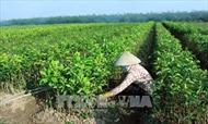 Tạo lập cơ chế tích tụ, tập trung ruộng đất cho sản xuất quy mô lớn