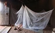 Phát minh loại màn khắc tinh của muỗi