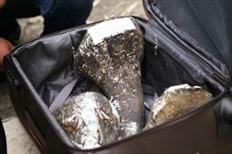 Lại phát hiện sừng tê giác nhập lậu qua đường hàng không