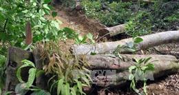 Tan hoang cánh rừng ở Măng Cành