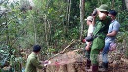"""Lâm Đồng tăng lực lượng bắt trùm lâm tặc """"Hà Đen"""""""