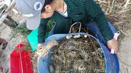 Hỗ trợ người dân Phú Yên khắc phục sự cố tôm hùm, ốc hương chết hàng loạt