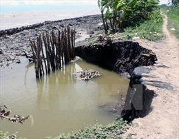 Sạt lở đe dọa nghiêm trọng rừng phòng hộ ven cửa biển Hố Gùi, Cà Mau