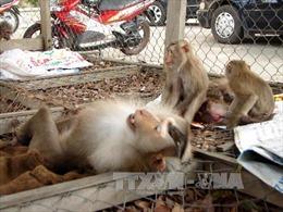 Giải cứu 13 con khỉ bị nuôi nhốt lâu năm