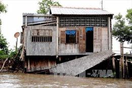 Trên 5.000 hộ dân Cà Mau đối diện nguy cơ sụt lún, sạt lở cao