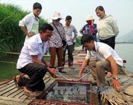 Làm giàu từ nuôi cá thuộc nhóm 'ngũ quý'