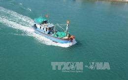 Thủ tướng yêu cầu ngăn chặn khai thác hải sản trái phép ở vùng biển nước ngoài