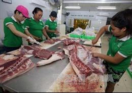 Giá thịt lợn hơi dao động ở mức 36.000 đồng/kg