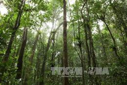 Chương trình hành động bảo vệ và phát triển rừng