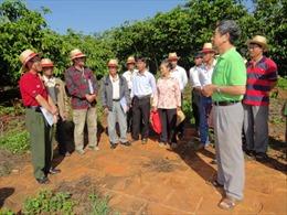 Lập kế hoạch sản xuất kinh doanh cho nông dân sản xuất cà phê